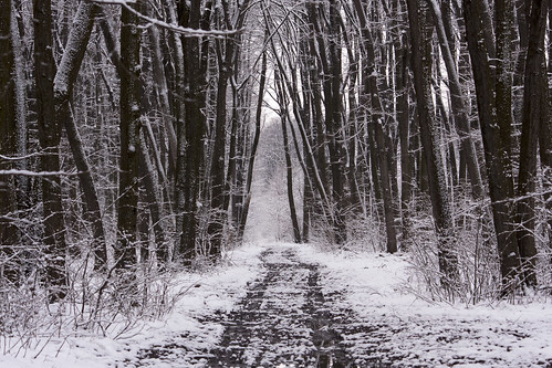 landscape pantelimon românia ilfov nature snow forest winter outside trees