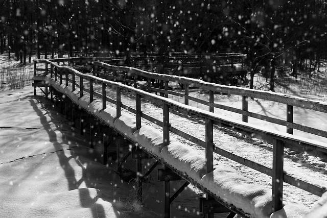 Boardwalk into the Woods