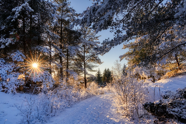 Winter afternoon, Norway (Explored)