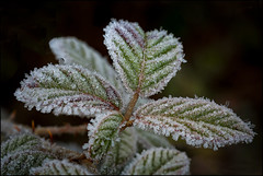FROST .