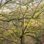 February Trees III