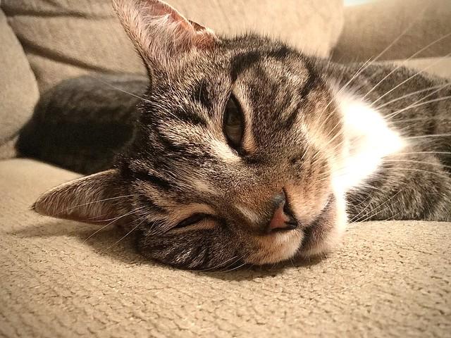 Felix, the Lazy Fuzzer