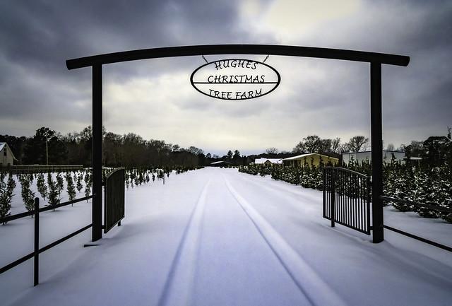 Hughes Christmas Tree Farm Entrance