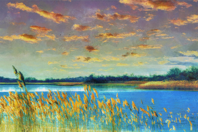 Reeds and Pond - Version 1