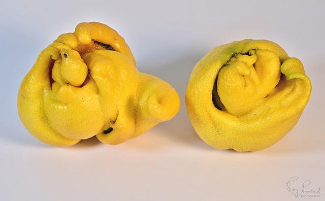 Freak Lemons – 3