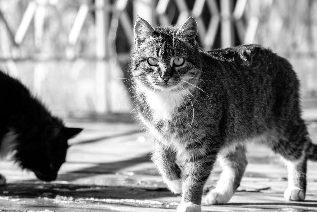 streetcats-bw_