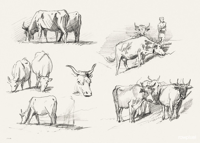 Studies of Cattle (ca. 1872) by John Singer Sargent. Original from The National Gallery of Art. Digitally enhanced by rawpixel.