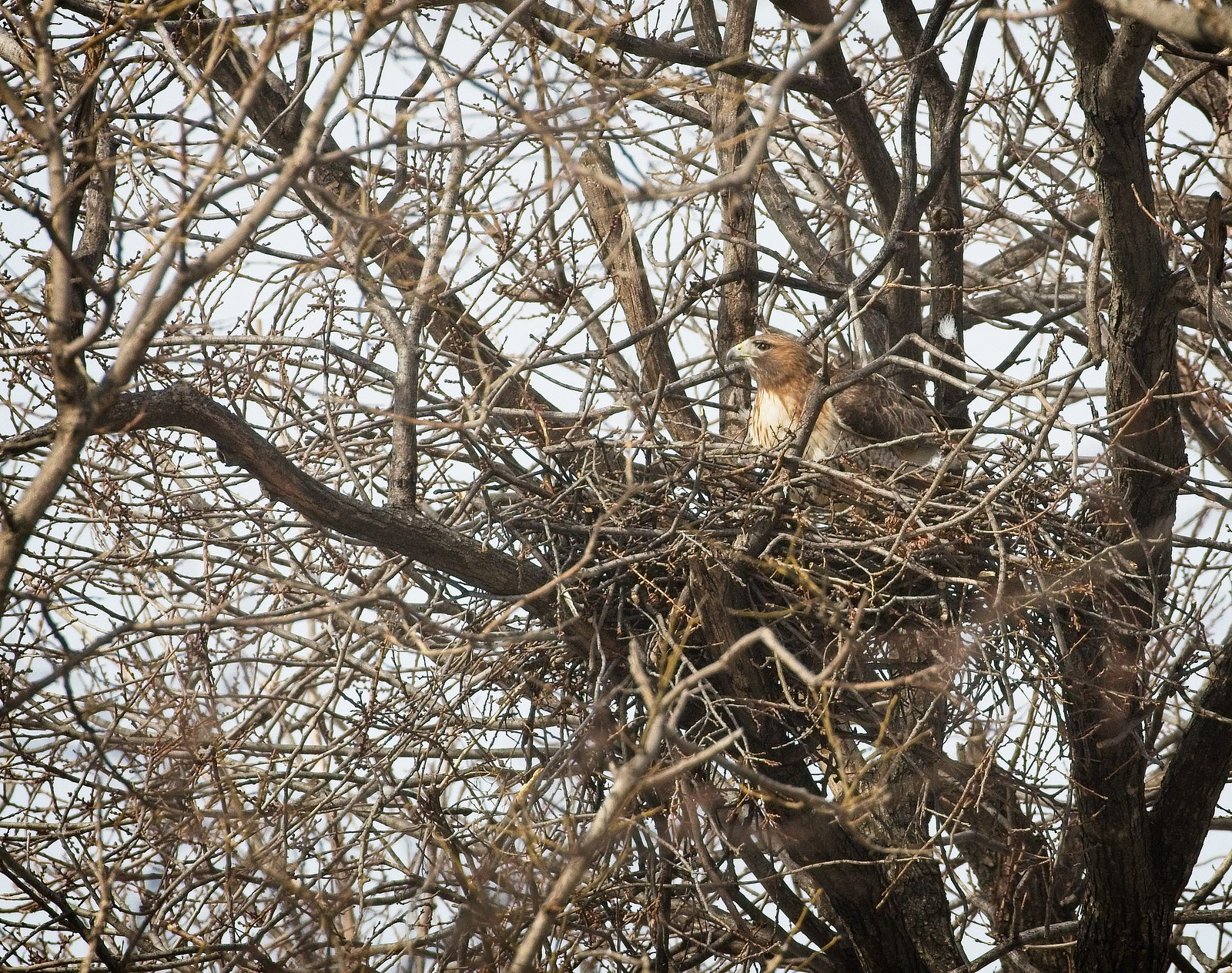 Amelia working on her nest
