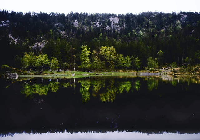 Mirrors of Green.