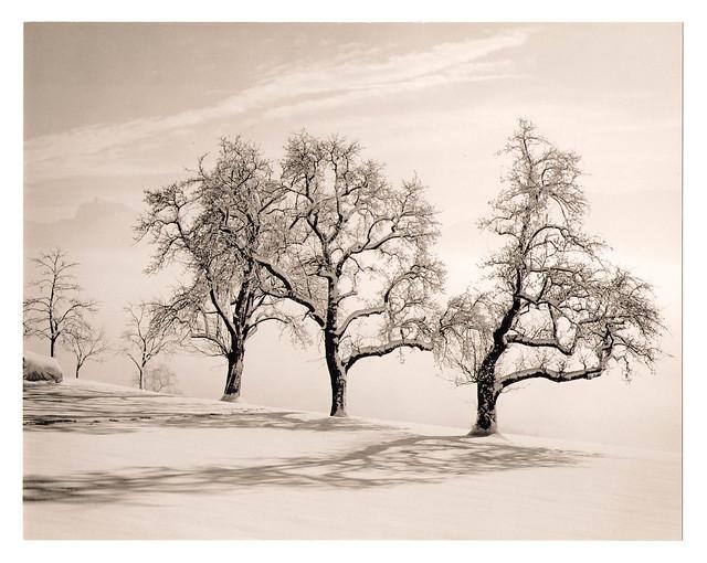 Birnbäume am Grasberg