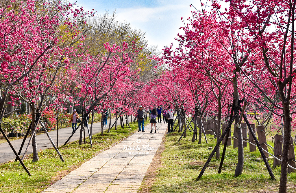 2021中科崴立櫻花公園01