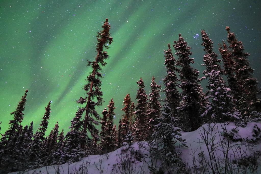 Boreal Aurora | Central Alaska (IMG_0071)