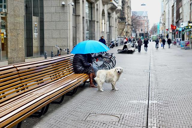 De blauwe paraplu