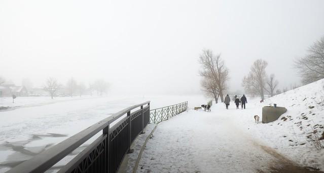 Ein nebliger Wintertag am Elbe-Lübeck Kanal....