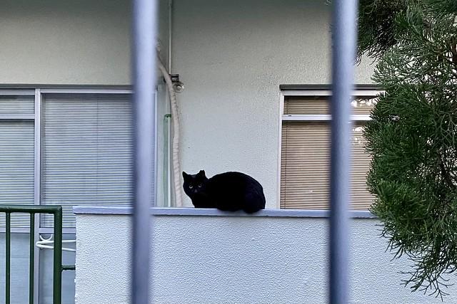 Today's Cat@2021−02−18