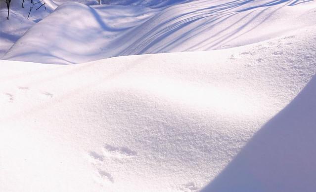 Ombrage. Empreinte d'écureuil sur la neige. Snow. C'est l'hiver québécois avec son froid et sa neige. Beautiful winter!