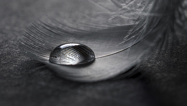 Feather with water droplet