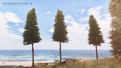 The Little Branch - Norway Spruce Tree v2 - MANCAVE