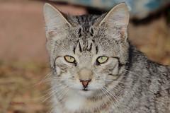Un gato en Polvoranca IMG_3748