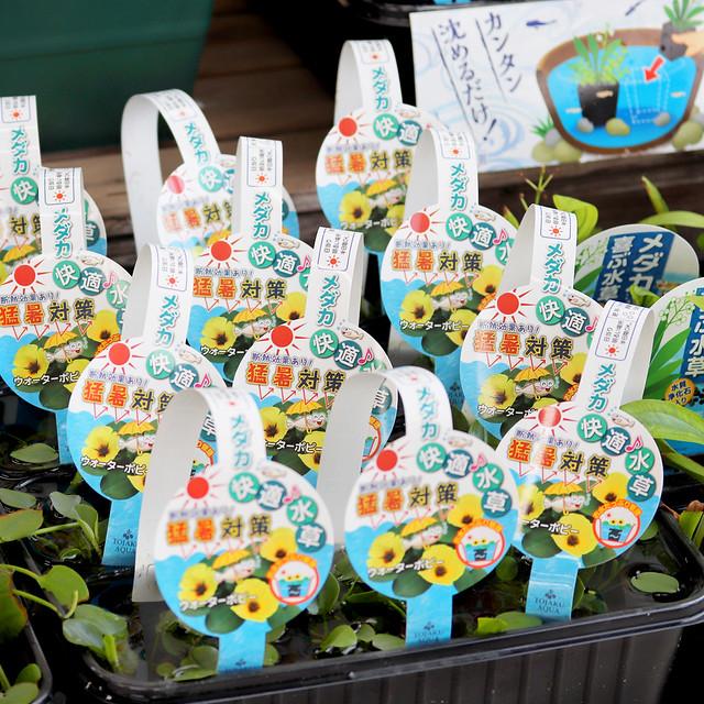 1080 Garden Shop