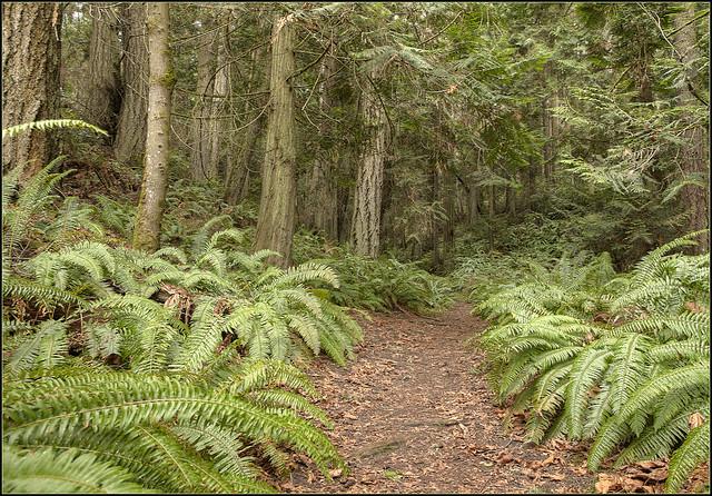Fern Trail Fort Townsend