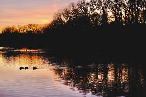 sunset lake ducks mallards swimming three trees park oaklandlake alleypondpark water swim serenity peaceful bayside newyork nyc fujixt4 xf18135mmf3556rlmoiswr february172021 reflection