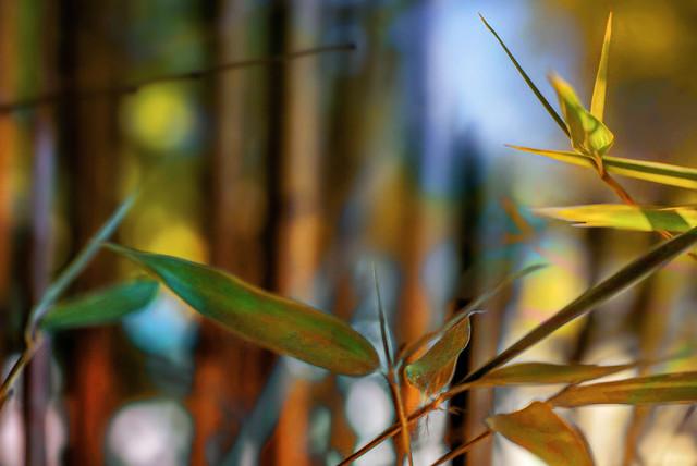 bambous colorisés