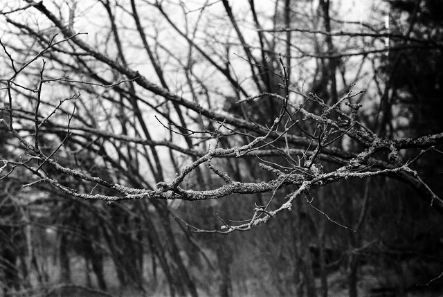bare branches and lichen
