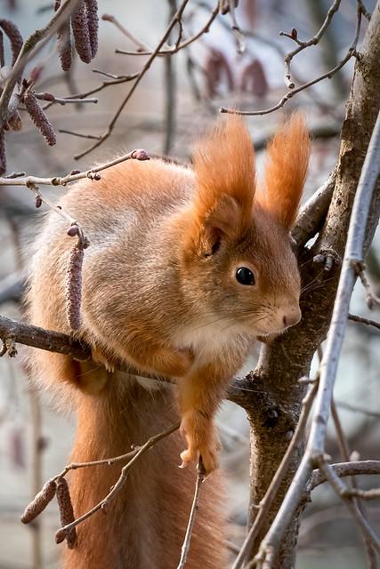 Eichhörnchen am Futterhäuschen
