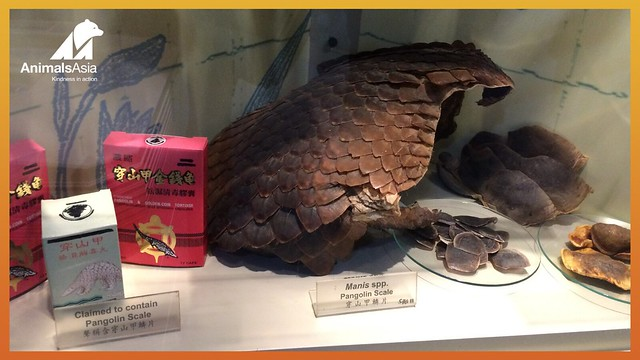 Pangolin in TCM