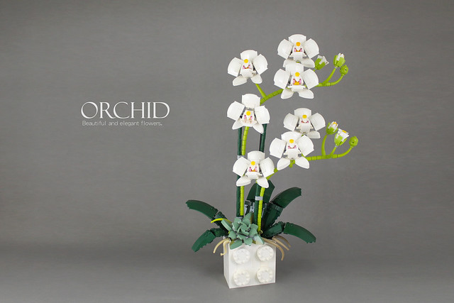 orchid2.0