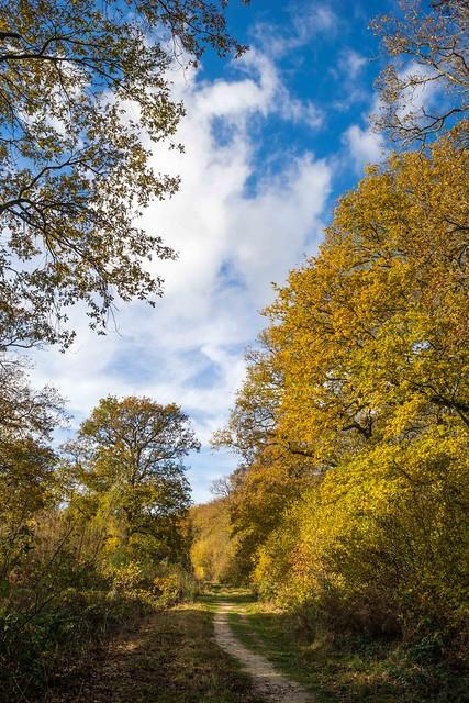 Blean Wood