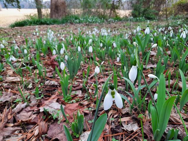 CP Winter Flowers