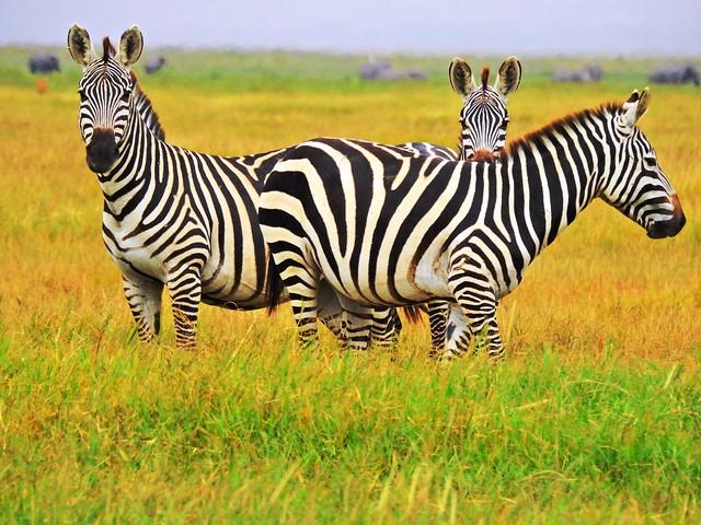 1248 ex  lotsa stripes **Explore**