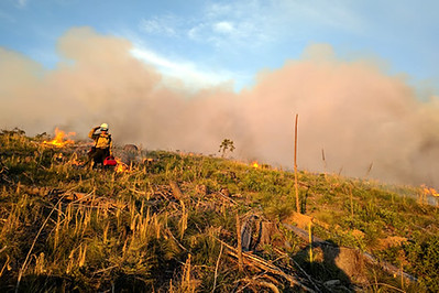 single file line of firefighters in wildland gear and packs walk away from the camera in single file along the edge of a road or dozer line through a landscape of blackened vegetation and burnt standing conifer trees.