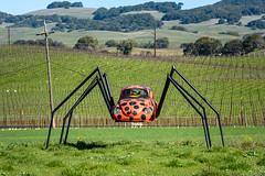 20210210_Ladybug_bug_0001