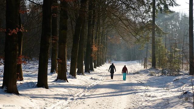 Winterwandeling in de Sysselt.