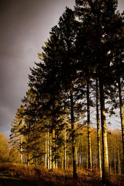 Winter Light-91