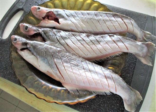Ikan buris
