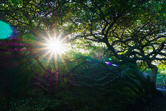 Sunlight in the Galapagos Islands