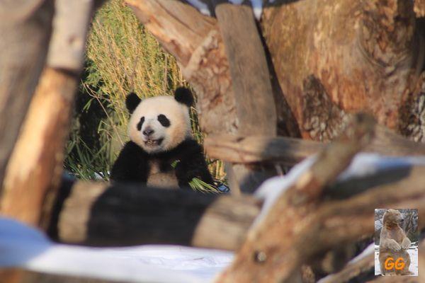 Besuch Zoo Berlin14.02.21045
