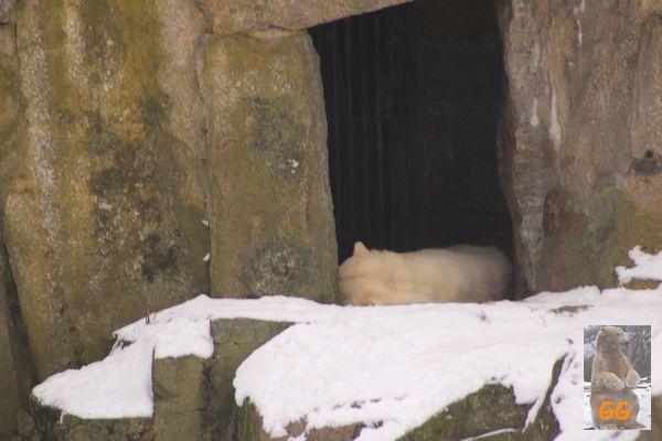 Besuch Zoo Berlin14.02.21007