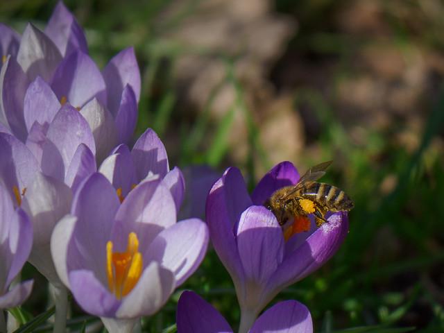 Der Frühling kommt / Spring comes / Llega la primavera