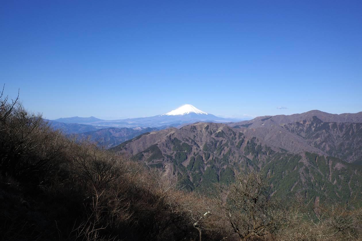 【丹沢】大山 富士山とミツマタの大群生へ 日帰り登山