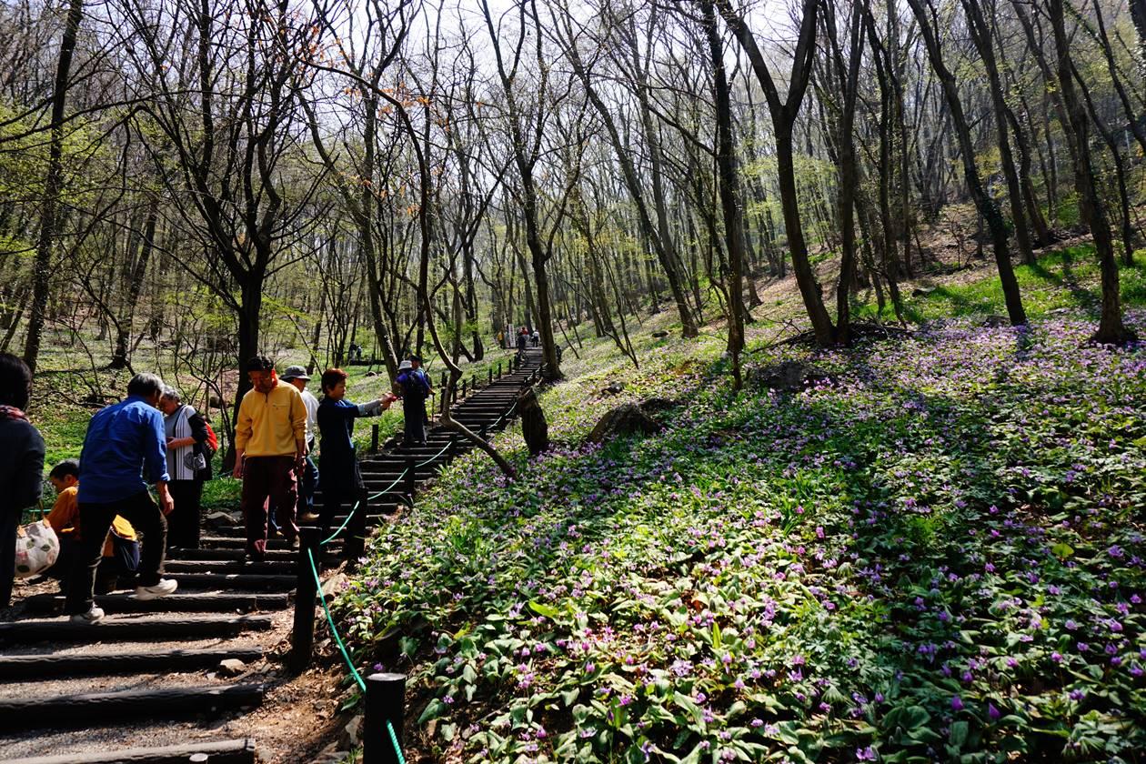 【栃木】三毳山 カタクリの大群生へ 春の登山