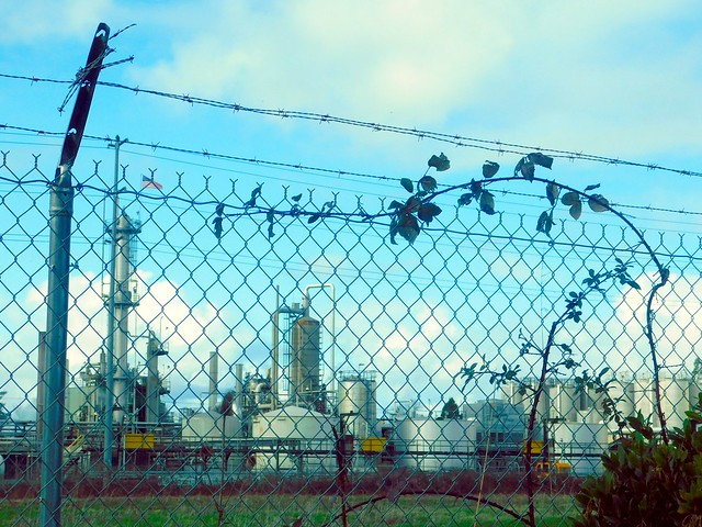 Chain Link Fence, Blackberry Vine, Factory, Clouds
