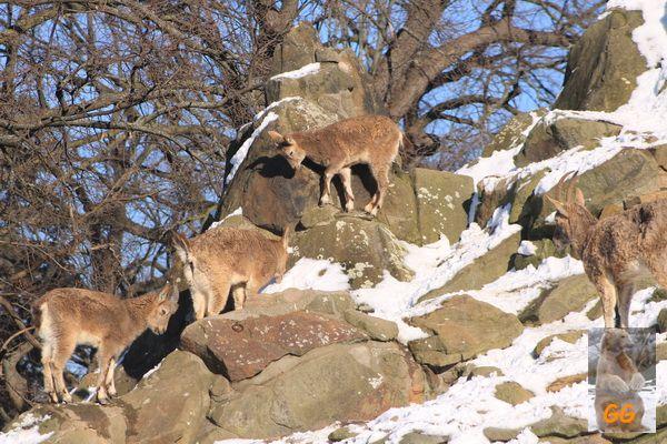 Besuch Zoo Berlin14.02.21087