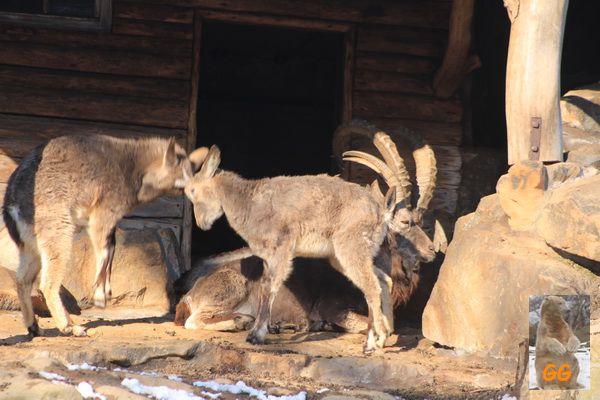 Besuch Zoo Berlin14.02.21084