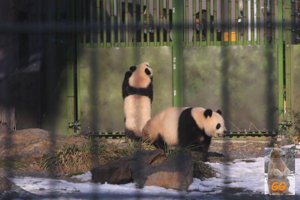 Besuch Zoo Berlin14.02.21033