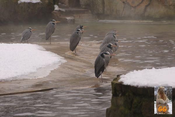 Besuch Zoo Berlin14.02.21010